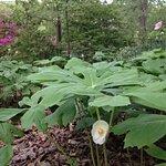Fairy house plant