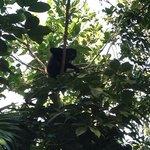 Monkey near standard rooms