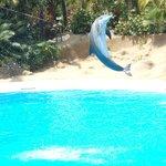 Brilliant Dolphin Show