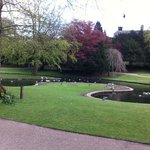 Ducks in the gardens