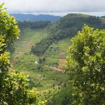 View of Bwindi Forest from our cottage balcony