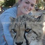 Cheetah encounters on Safari near Hermanus