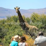 Walking Safari with African animals near Hermanus