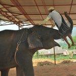 Edy et ses elephants