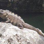 Iguanas everywhere...very cool!