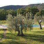 Piscina fra gli olivi