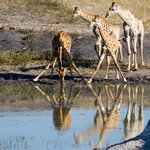 Game drive, Elephant drinking water