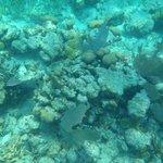 Coral reef Belize 2014