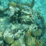 Coral reef Belize Apr. 2014