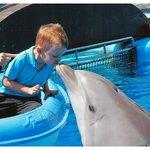 Dolphin Encounter at Mundomar
