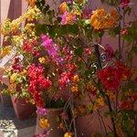 Fleur terrasse 1
