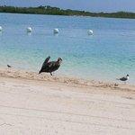Birds on the beach....