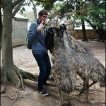 Feeding the Emus