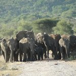 Elephants at watering hole outside restaurant