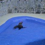 zeeleeuwen , zeehonden...