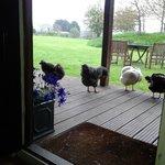 morning visitors!