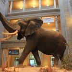 Smithsonian Ulusal Doğal Tarih Müzesi