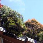 Lussuoso giardino pensile sull'altro lato di via Palermo
