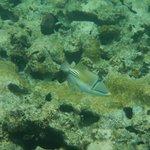 обитатели рифа