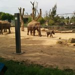 Elephants at twycross