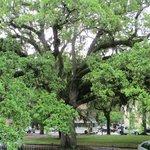 Stately live oak trees are abundant