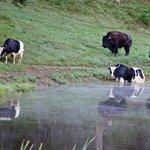 Citico Wildlife Wilderness