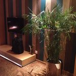 Beautiful plant in the room