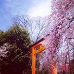 Red Torii Gate at Hirano jinja.