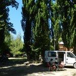 Zona para acampar del camping con unos álamos hermosos