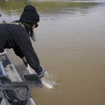 Releasing a sturgeon back into the Fraser