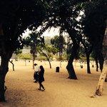 Gli alberi che fanno ombra