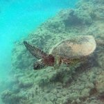 The sea turtle that swam by me!