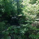 Garvan Woodlands