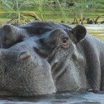 River Cruise on the Zambezi River