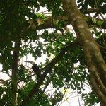 The toucans place