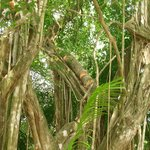 The toucans tree