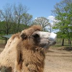 Camel Takes Bucket from my Grandson, Taylor