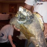 This was the giant prehistoric snapping turtle. Like a real life Koopa. We loved this guy!