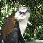 A resident of Grand Etang Rain Forest!