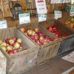 over 100 varieties of apples