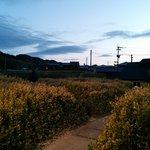 夕方 建屋の内から庭を撮影