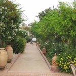 Chemin dans le jardin entre les maisons