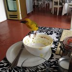 Cape Weaver joins me for lunch!