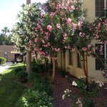 Flowering trees on property