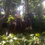 Elephant ride, sayang kami tidak mencoba