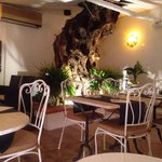 A very old olive tree grows up through the roof of the restaurant.