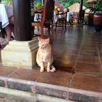 A lovely cat called Kimmy, she's the boss of Villa Semana!