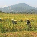vue rizières