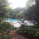 The serene pool