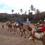 Camel riding neaby